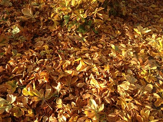 leaves, fall, lawn care, fertilizer, land management