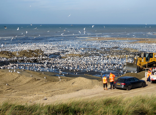 Seagulls anyone?, Canon IXUS 127 HS