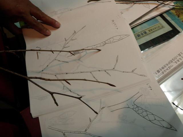 斎藤先生が顕微鏡を使って観察し,作成した資料を見ながらイヌブナとブナの違いの解説をじっくりと聞く.