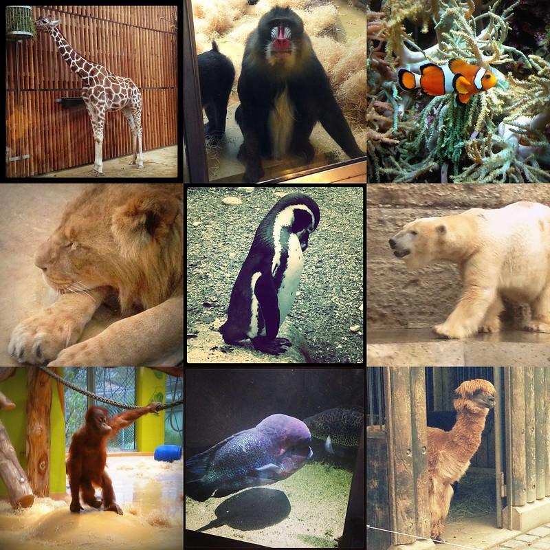 mystringaling zoo