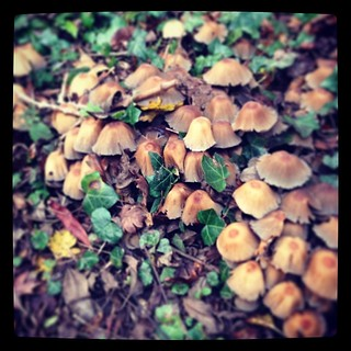 Mushrooms #nature