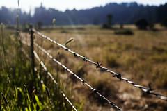maillard ranch