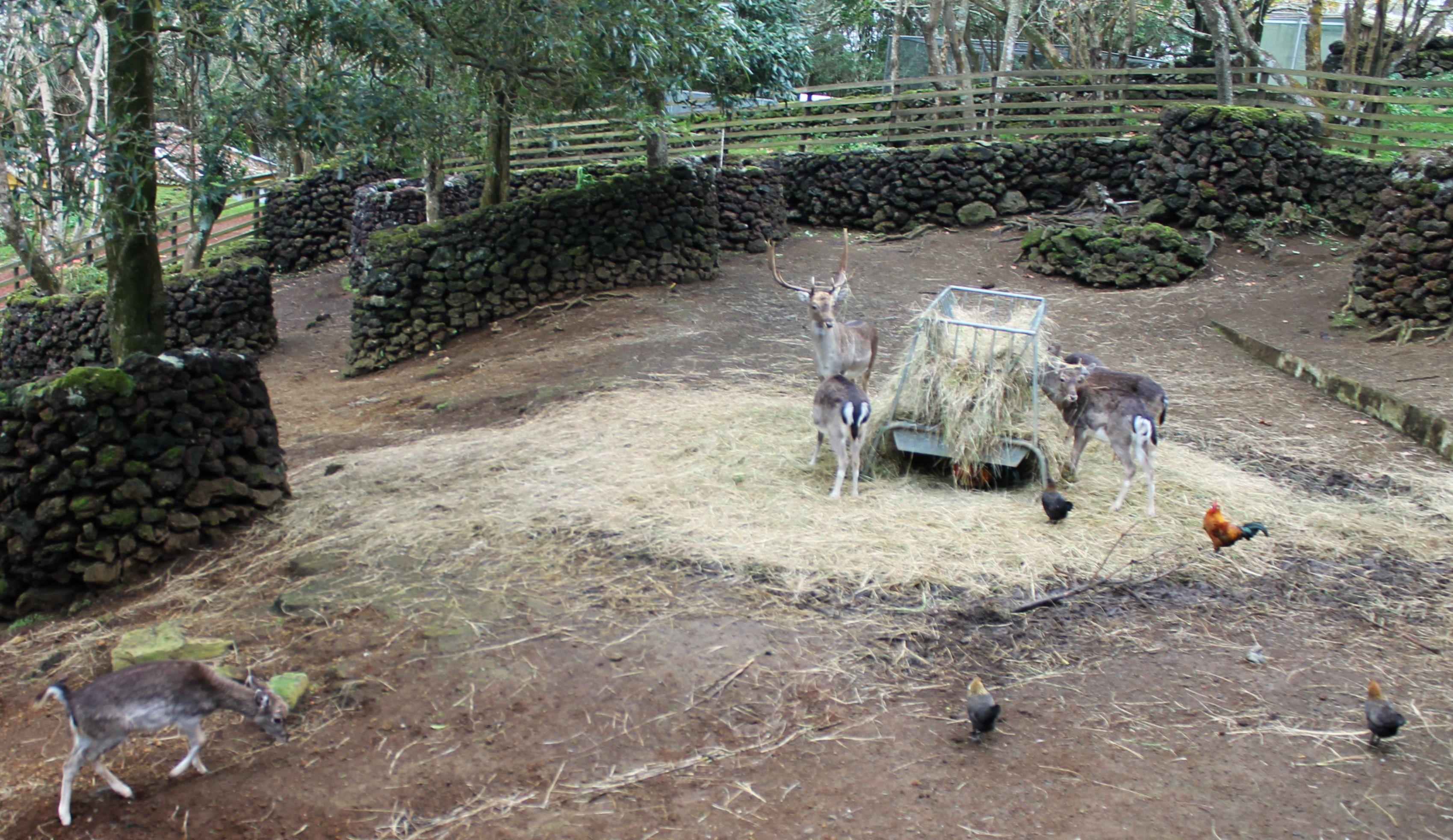 06 Deer a Feeding