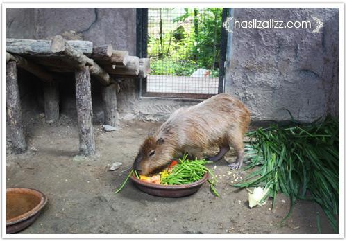 11711730043 a944f7a38b o BERCUTI DI HATYAI THAILAND PART 6   songkhla Zoo