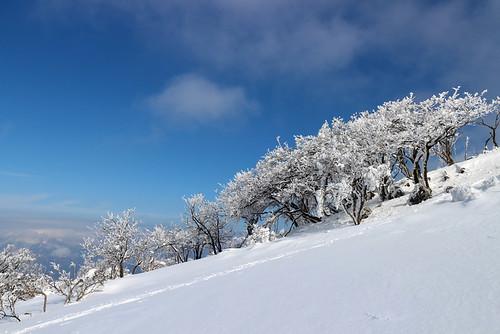 霊仙山霧氷