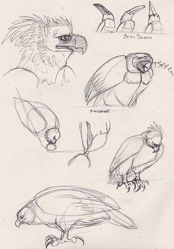 "1.18.14 - ""Jungle Eagle"" Sketches"