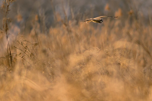 Flight of grassland by ja1dql