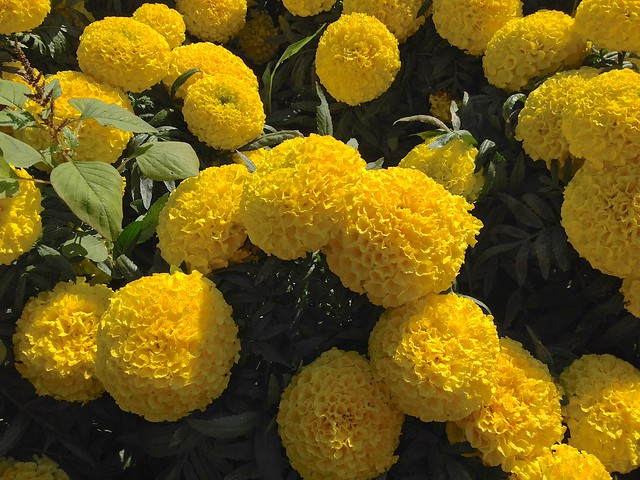 Flowers at Chiang Mai University