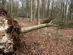 fallen-tree-black-woods