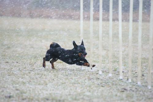 Snöagility!