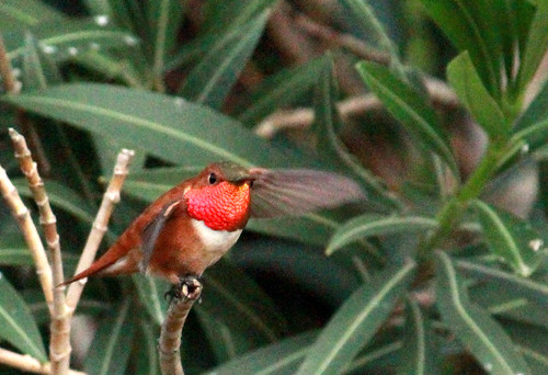 144376-1.jpg by Robert W Gilcrease