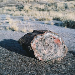 11 - Petrified Wood at Crystal Forest