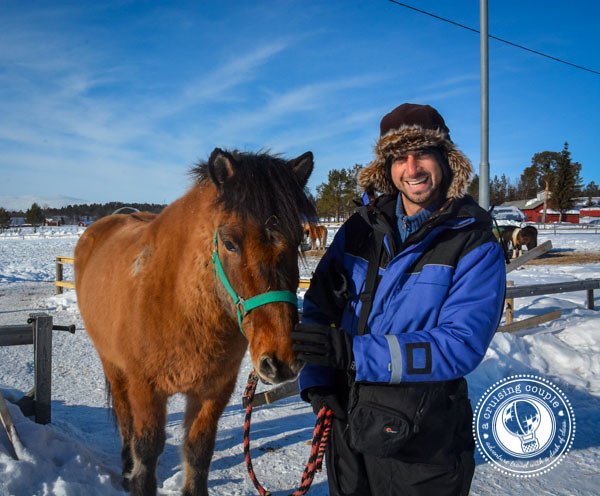 A Moose Safari Via Icelandic Horse - A Cruising Couple with Icelandic Horses in Swedish Lapland