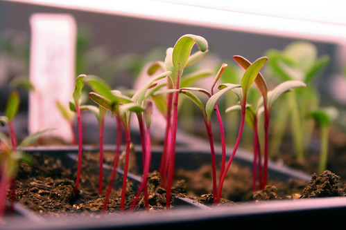 seedlings 7020