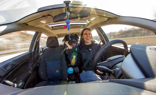 Taking Marley for a Ride - I Love My Dog