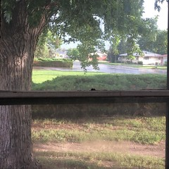 After the rain. <3 #throughthewindow