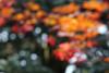 Impressionist Japanese garden