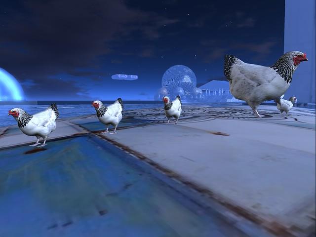 The Egg - Blue Hen  Line Up