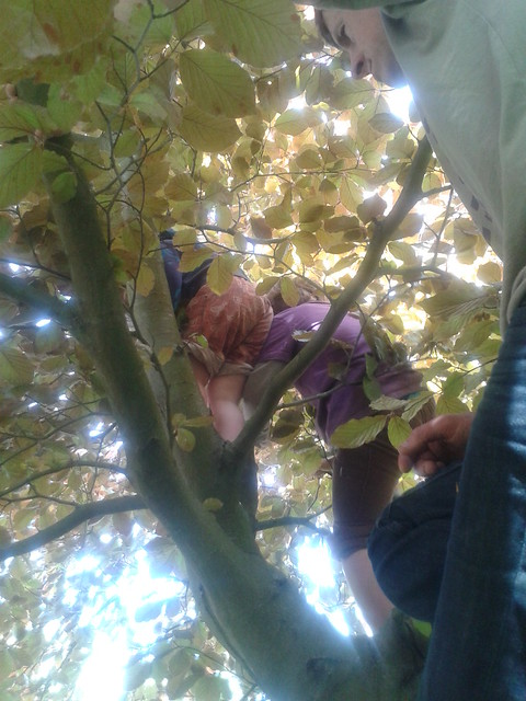 Allotment Monday - climbing in a copper beech