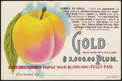 Gold $3,000.00 plum. (front)