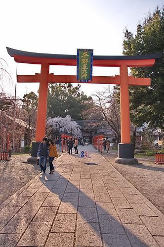 【写真】2013 桜 : 平野神社/2021-01-09/IMGP8721