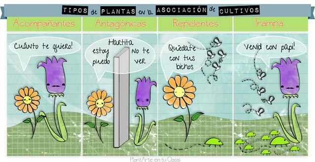 Tipos de Plantas en la Asociación de Cultivos