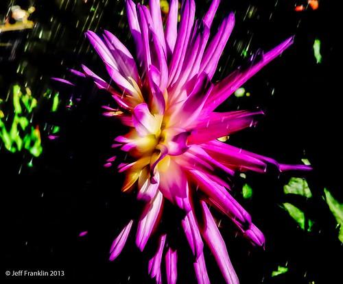 neon bloom.