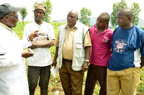 The farmers listening to Professor Kimani's technical advice on planting breeder's seed.