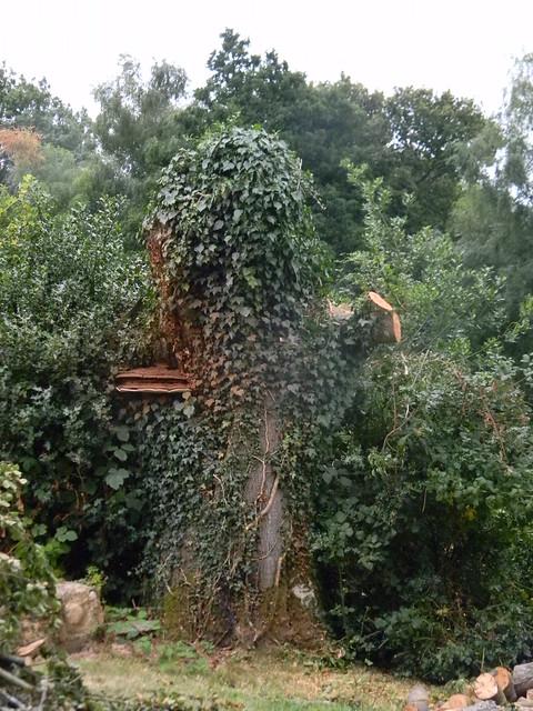 Suspicious looking tree