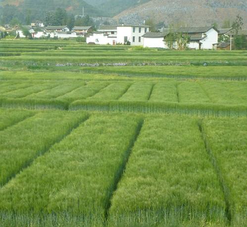Yunnan13-Lijiang-Dali-Route (32)