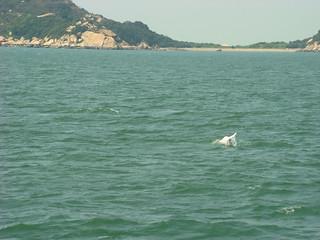 038 Poging om roze dolfijnen te fotograferen