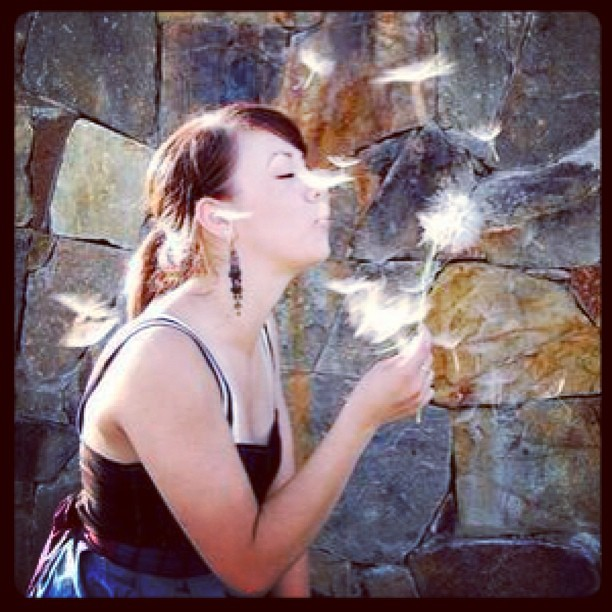 Anyone remember this one? The photo used for one of my very first blog headers! Photo credit: Roadystyle #tbt #throwbackthursday #dandelion #makeawish