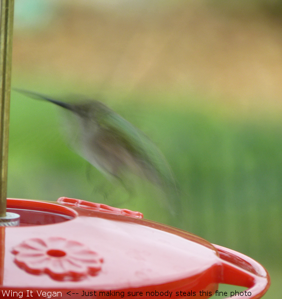 90 % of my hummingbird photos look like this