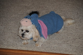 Sammy as Eeyore