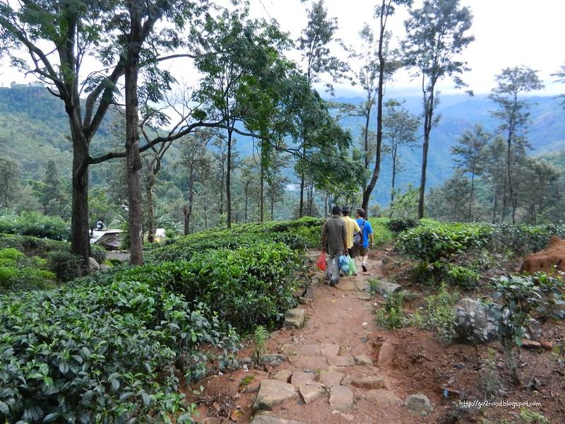 Элла, к селению работников чайных плантаций