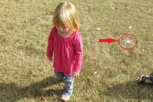 when going through pictures, I figured out exactly where Lucy lost her toy unicorn