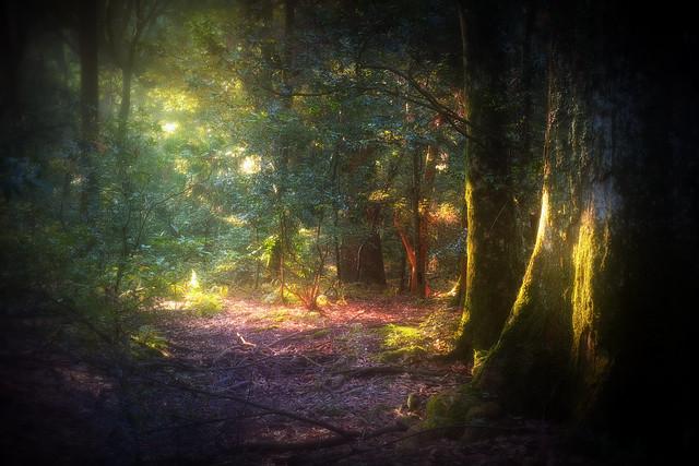 The forest of Wonderland