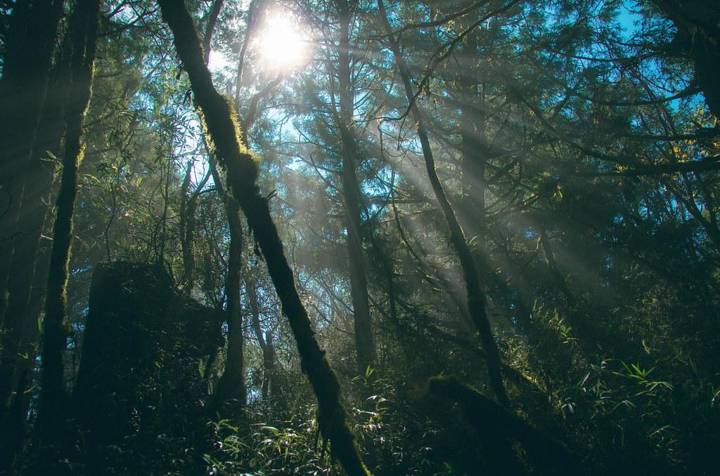 太平山-迷霧森林