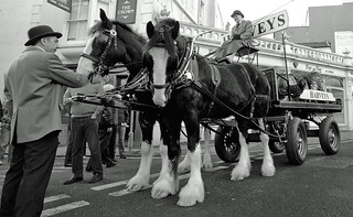 Harveys Ale Dray Horses & buster the dog.