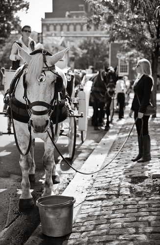 Carriage rides, Old City, Philly...