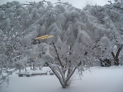 branch, winter, tree, snow, ice, frost, winter storm, blizzard, freezing,