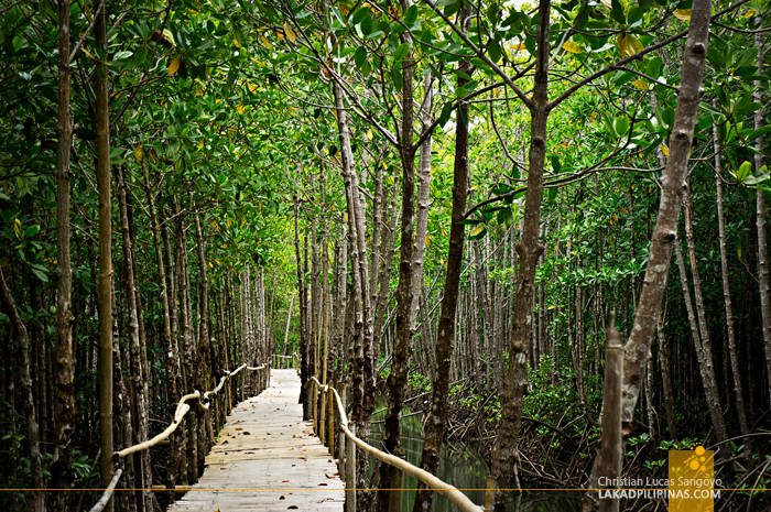 Lush Mangroves at Kalibo's Bakhawan Eco Park