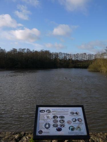 Hillfield Park Pool