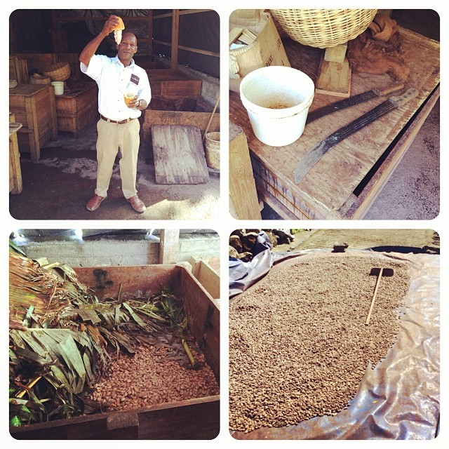 Learning how to harvest cocoa at Hotel Chocolate