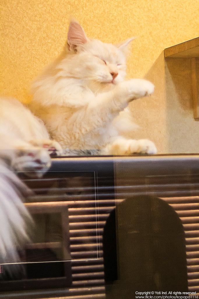 元氣貓主題餐廳 IMG_6067