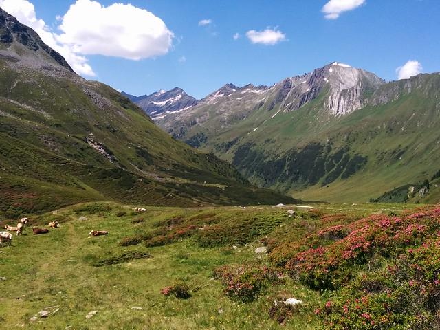 Abkürzung über die Almwiesen Richtung Knuttenalm