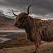 Isle of Mull by osedok