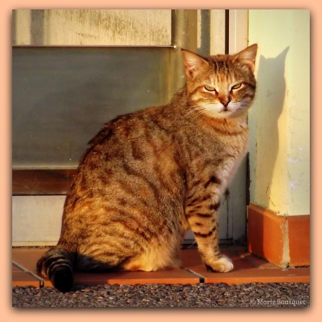 Chat face au soleil levant