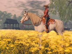 Bento Riding Horse