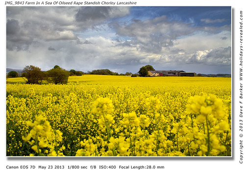 IMG_9843 Farm In A Sea Of Oilseed Rape Flowers  Standish Lancashire by Just Daves Photos